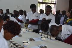 Congolese coffee rises again (USAID Democratic Republic of Congo) Tags: usaid coffee congo drc southkivu