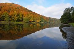 Saison des couleurs chatoyantes (Excalibur67) Tags: autumn forest automne landscape nikon sigma alsace paysage reflexion reflets eaux tangs d7100 vosgesdunord forts ex1020f456dchsm