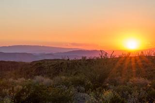 Late Desert