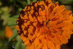 (pransis.ramos) Tags: flower macro canon 50mm18 extensiontube niftyfifty