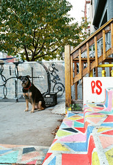 P.S. (Georgie_grrl) Tags: dog toronto ontario cute stairs bright steps canine ps pentaxk1000 colourful kensingtonmarket poochie rikenon12828mm