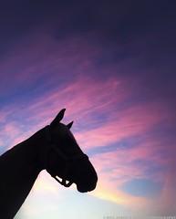 (James A. Vitullo Photography) Tags: sky horses horse sun color colors silhouette sunrise skies head silhouettes