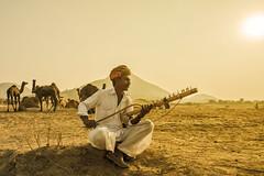 MIA_9908 (yaman ibrahim) Tags: india camel shiva gypsy pushkarmela rawantatha