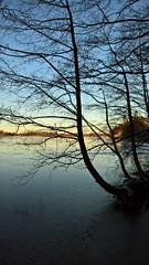 Silhouette (Antti Tassberg) Tags: winter lake tree ice silhouette finland smartphone microsoft wp talvi puu xl 950 jrvi j uusimaa lumia esbo pitkjrvi pureview lumia950xl