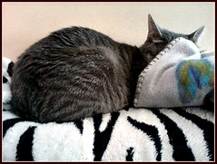 INCOGNITO (Ann Frye) Tags: cat nap sleep stripes sparkle blanket snoot moonwhiskers catsbymoonwhiskers