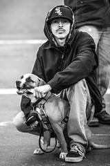 Sox (Thomas Hawk) Tags: america bayarea california mission missiondistrict sf sfbayarea sanfrancisco usa unitedstates unitedstatesofamerica westcoast bw dog protest fav10