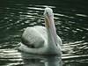 Fuji Fine Pix HS10 853 (bobduke2) Tags: fujifinepixhs10 pelicanpinelevelalabama