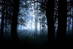 Dark forest (Larson.patrik) Tags: forest dark halloween 2016 sffle vrmland canon canon6d blue monochrome silhouette light contrast tree sunrise fog foggy silent alone scary