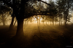 Sunrise mist (Jantje1972) Tags: sunrise mist trees morning nederland netherlands posbank nationalpark zonsopkomst zon licht