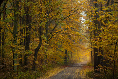 Fall Foliage (Łukasz Babula) Tags: poland autumn october wood woods forest tree trees leaves road path trail orange yellow red gold morning calm peaceful serene nature natural landscape countryside colours outdoor plant fall nikon d60 nikkor 1855 foliage