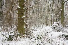 ckuchem-1651 (christine_kuchem) Tags: baumrinde buche bume eiche eis frost hainbuche natur pfad pflanzen ruhe samen spuren stille struktur wald weg wildpflanzen winter einsam kalt schnee ste