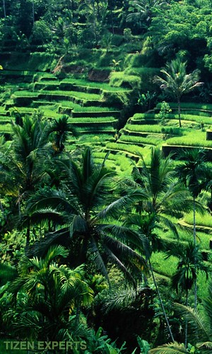 "Samsung-Z2-Indonesia-Wallpapers-TizenExperts-3 • <a style=""font-size:0.8em;"" href=""http://www.flickr.com/photos/108840277@N03/30072325110/"" target=""_blank"">View on Flickr</a>"