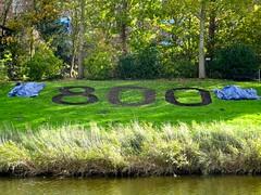 20161102 800 bloembollen (enemyke) Tags: pixeldiary 2016 november 800 middelburg bloembollen middelburg800jaar flowerbulbs bulbos cebollas