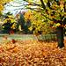 Raining+leaves
