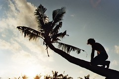 'Sharing a dream on a island, it felt right' (Alessandra Poli) Tags: island dream palm tree shadow 35mm kodak iso200 nikon young soul youth free freedom dreamer bali indonesia boy love life sunset adventure wild jungle
