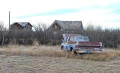 We'll Get Her Running (Sherlock77 (James)) Tags: saskatchewan truck pickup abandoned chevrolet house hedge