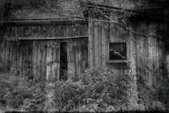 Old Barn (SunnyDazzled) Tags: barn oldfashioned retro photography effects bw wooden siding doors windows sad lonely country rural abandoned