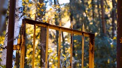 HFF...come in :-) (AstridSusann) Tags: hff autumn zaun open outdoor emsland germany twist oktober2016 fences friday