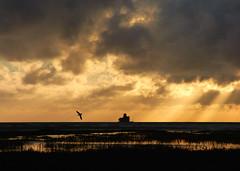 Cleethorpes Sunrise (Peanut1371) Tags: cleethorpes sunrise clouds sky bird fort sea