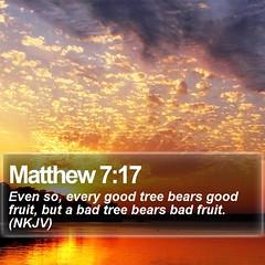 Daily Bible Verse - Matthew 7:17 (daily-bible-verse) Tags: scripture beautiful spiritual inspirational preaching praisejesus wordoflife