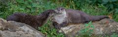 Visotter-6666 (Esther van Rooijen) Tags: bayerischerwald animals wildlife