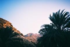 Muscat (cranjam) Tags: lomo lca lomography film slide xpro kodak elitechrome100 sultanateofoman oman middleeast shangrilabarraljissah shangrila hotel palmtrees palme montagne mountains