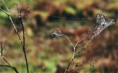 * (PattyK.) Tags: ioannina giannena giannina epirus ipiros november 2016 raindrops nature greece griechenland balkans web         amateurphotographer ipiccy nikond3100