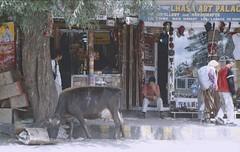 Ladakh 2005 (patrikmloeff) Tags: menschen people gens man men altstadt oldtown kuh cow animal tier shop laden geschft leh street strasse rue leben live indien india inde indian indisch asien asia asie asian asiatisch erde earth terre monde welt world ferien urlaub vacances holiday holidays beautiful buddhismus buddhism ladakh analog analogue minolta sommer summer et little tibet travel traveling reise reisen voyage outdoor adventure