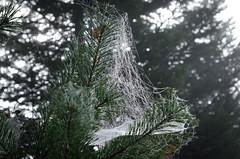 20161030-WOL_7734.jpg (viennalinux) Tags: spaziergang nebel herbst nature tauern fog natur ossiach ossiacher