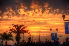 Solo Flight (Michael F. Nyiri) Tags: sanpedroca southerncalifornia california vincentthomasbridge harbor losangelesharbor sunrise morning clouds