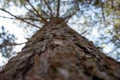 Growing up , #color , #Light , #composition , #Dramatic , #Amazing , #moment , #Closeup , #bokeh , #tree , #Macro , #mothernature , #delicate , #Naturephotography , #withimpact , #neverstopexploring , #Pure , #travel , #explore , #Worldprime , #summer , # (jwzw@ymail.com) Tags: growing up color light composition dramatic amazing moment closeup bokeh tree macro mothernature delicate naturephotography withimpact neverstopexploring pure travel explore worldprime summer beautiful enchanting upclose photoart blooms saturation naturelovers wanderlust woods bark