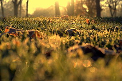 into the mystery (joy.jordan) Tags: frost grass leaves autumn light sunrise bokeh dew 52by52
