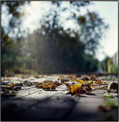 Herbst (Ulla M.) Tags: yashicamat124g mittelformat canoscan8800f 6x6 herbst analog autumn laub blätter dof gegenlicht tlr tetenalcolortec fujireala umphotoart