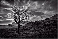 Glade How (Hugh Stanton) Tags: tree mist mountain appickoftheweek