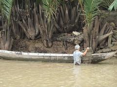 Trap (program monkey) Tags: vietnam mekong river delta cargo boat ben tre tra vinh palm tree half submerged emergent fish trap work seafoods