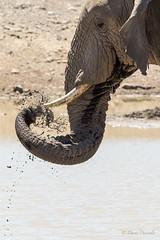 Drops (davdenic) Tags: africa ngorongoro savana savanna serengeti tanzania nature safari wildlife