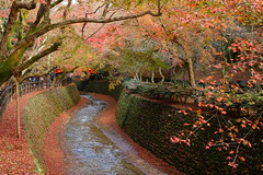 DSC02805 (MrSUIZOU) Tags: 京都 紅葉 北野天満宮 平野神社 十月桜