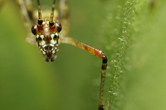 Some photos of a Katydid (I think) #macro #katydid (shaun.m.mccabe) Tags: macro katydid