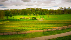 Holland tulip field (BlundaVare) Tags: flower tulip landscape nature holland tree trees clouds fence gravel bush color yellow green red pink a6000 sony