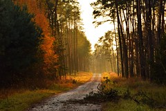 paths and roads (JoannaRB2009) Tags: path road light tree trees forest woods nature autumn fall sunny sunlight sunlit dzkie lodzkie polska poland landscape view