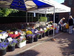 Market day at Tring (Snapshooter46) Tags: flowers tring highstreet hertfordshire marketday flowerseller
