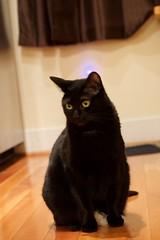 Cat photos (khoalitytime) Tags: cats luna mamoru