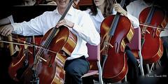 CELLOS - VIOLONCHELOS (mariagrandi985) Tags: violoncello musicalinstrument musician music cello makemesmile mariagrandi985