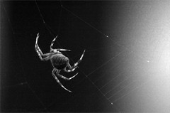 Spider_2015 (1) (d-i-g-i-f-i-x) Tags: bug spider web creepy yuck arachnida thingsmywifereallyhates