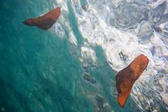20150905-DSC_3334.jpg (d3_plus) Tags: sea sky fish beach japan scenery underwater diving snorkeling  shizuoka    apnea izu j4  waterproofcase    skindiving minamiizu       nikon1 hirizo  1030mm  nakagi 1  nikon1j4 1nikkorvr1030mmf3556pdzoom beachhirizo misakafishingport  1030mmpd nikonwpn3 wpn3