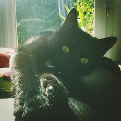 Beethoven my atomic kitten (nic0v0dka) Tags: