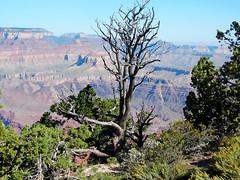 Grand View Point, Grand Canyon 9-15 (inkknife_2000 (6.5 million views +)) Tags: arizona usa landscapes grandcanyon coloradoriver skyandclouds nationalparks grandviewpoint dgrahamphoto strataofearth
