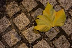 Fallen (Jim Kazujo) Tags: nightphotography autumn dublin stone night square grey canal leaf fallen granite