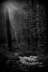 Autumn light 12 (johan van moorhem) Tags: morninglight belgium belgique belgi flanders ursel drongengoedbos vlaanderen oostvlaanderen drongengoed walkinthewood