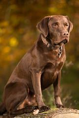 taylor_tal-5 (Florian Jakob Rothlehner) Tags: hund hasutier drausen blitz strobist 6d canon bokeh lastolite firefly yongnuo